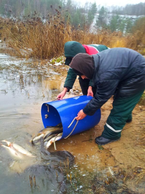 оптом рыбная база цены форель одинцово спортивное термобелье нужно