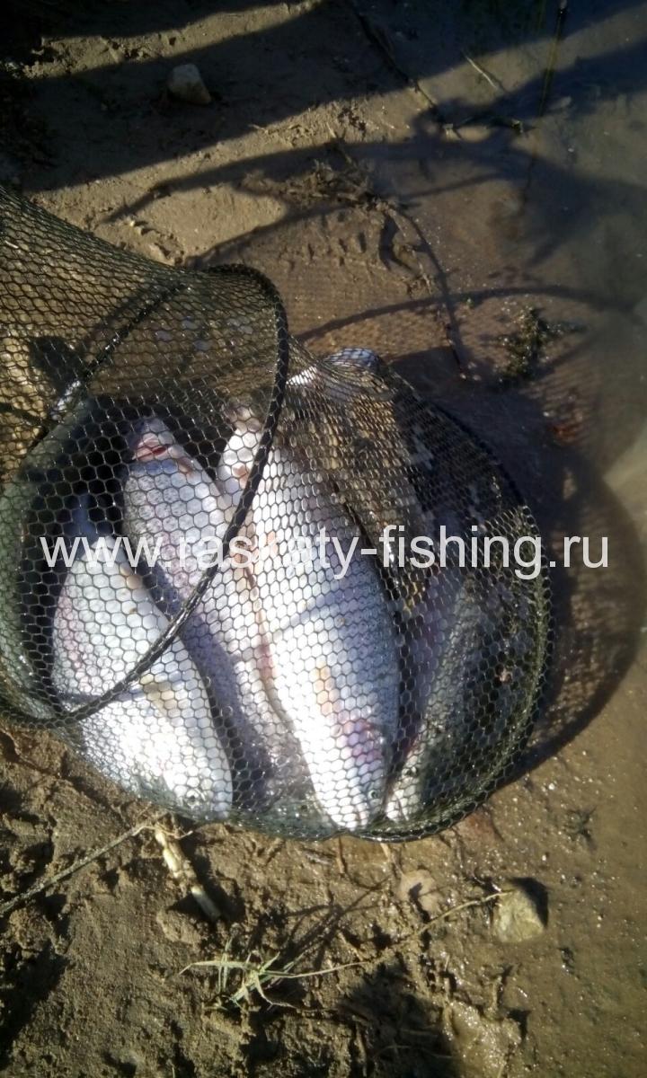 рыболовный клуб раскаты тучково